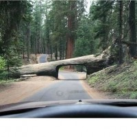 an-unusual-tunnel-in-californias-sequoia-national-park